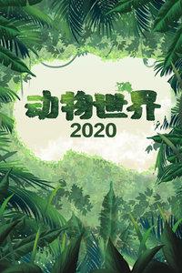 动物世界 2020