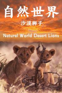 自然世界:沙漠狮子