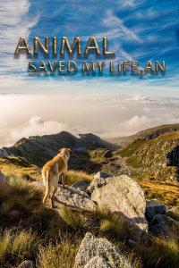 动物救援行动