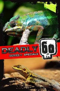 致命的60种生物 第一季 特别节目