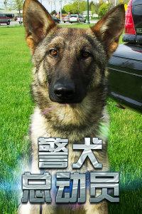 警犬总动员