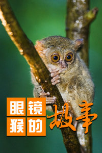 眼镜猴的故事