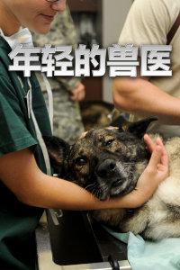 年轻的兽医