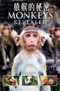 猿猴的秘密