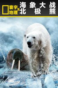 寰宇地理之海象大战北极熊