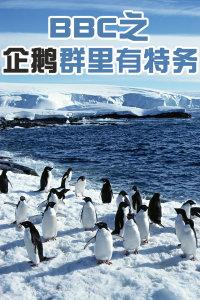 BBC之企鹅群里有特务