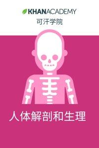 可汗学院:人体解剖和生理