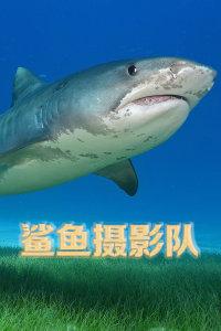 鲨鱼摄影队