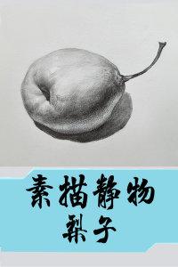 素描静物 梨子