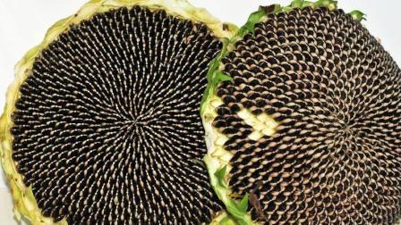 北方人称葵花籽为瓜子, 常吃瓜子的人身体都会发生这样变化