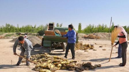 这个大嘴机器了不得, 吃进葵花头, 吐出葵花籽, 真是农民好利器