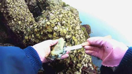 """遇到野生牡蛎礁? 一把蚝刀带你享受""""蚝门""""盛宴!"""