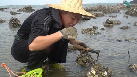 渔民海上挖生蚝直接就可以吃了,味道非常美味你们都是怎么吃的