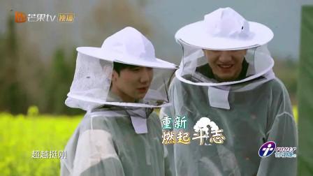 杨超越很刚啊,徒手取蜂蜜!王源被蜜蜂蛰了!为啥不戴手套啊