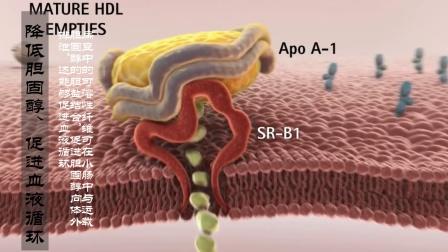 每天吃10粒, 血管干净, 一生不得癌, 还能滋补益气抗衰老