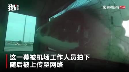 摆渡车倒车撞上飞机 机鼻瞬间插入车内