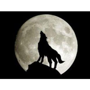 北方的狼cwp