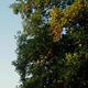 千万年大树1