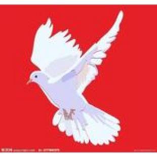 白鸽国际排舞