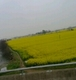 vhuangfan