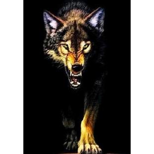 北方野狼24