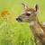 小鹿in童话盒子
