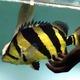 大黄蜂R8