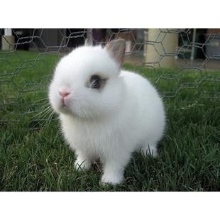 戈壁小白兔