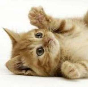 冷月猫喵喵