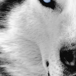 Solomon_Wolf