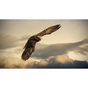 狙击手猎鹰1