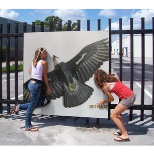 鹰缘4988