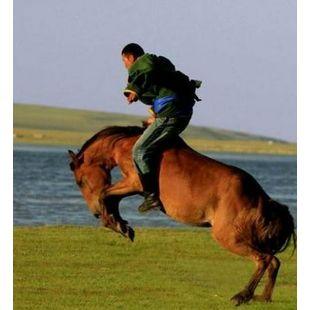 hoh-mongol