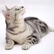 奶油cat