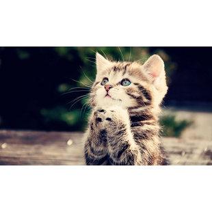 任猫猫猫猫