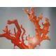 红珊瑚太极迷