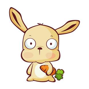 猫和芒果过敏的兔子