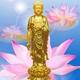 阿弥陀佛遍法界