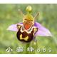 小蜜蜂010689
