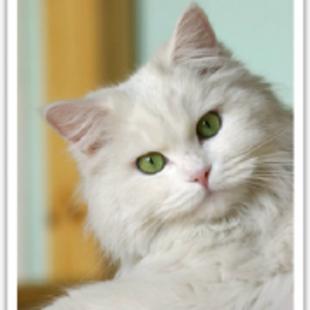 北京宅猫猫