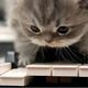 不会打鼓的键盘手YCX