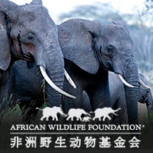非洲野生动物基金会