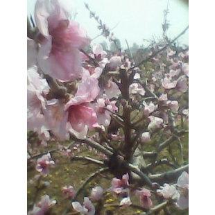 春暖花开XSC