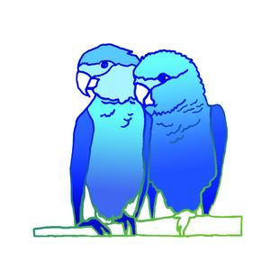 Spix鹦鹉