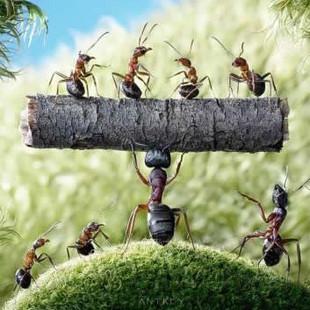 九只蚂蚁的金融