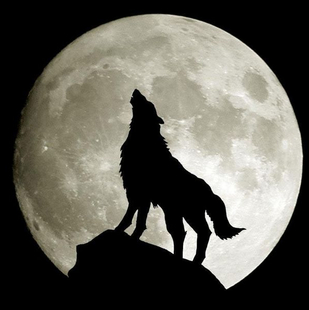 Dr_星夜孤狼