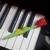 浩洋的钢琴世界