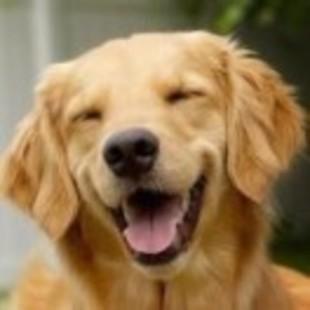 狗狗爆笑视频