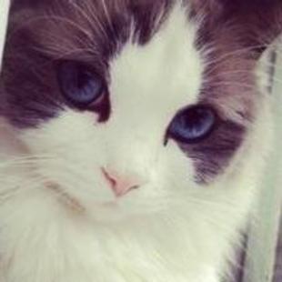 猫猫嘟嘟嘟嘟