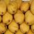 Mango_Mango